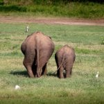 Big Elephant Small Elephant