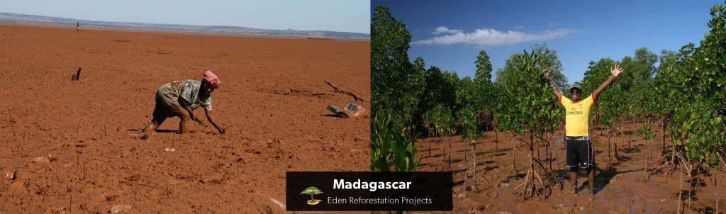 Madagascar Tree Planting